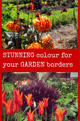 STUNNING colour for your GARDEN borders