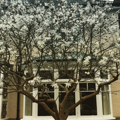 Transparent pruned magnolia