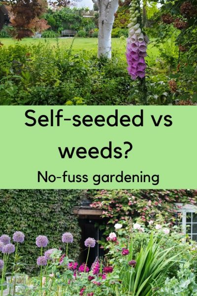 Self-seeders vs weeds - how to get the balance right