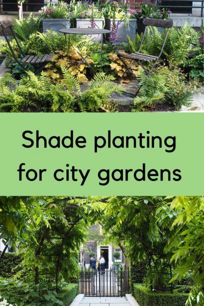 City garden shade planting