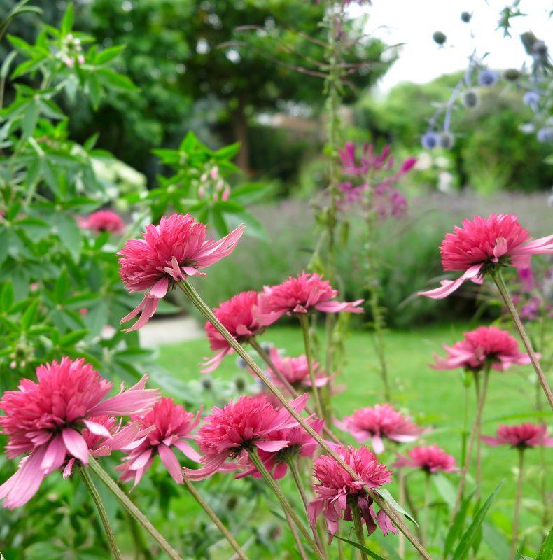 Inspiring plant ideas for your garden