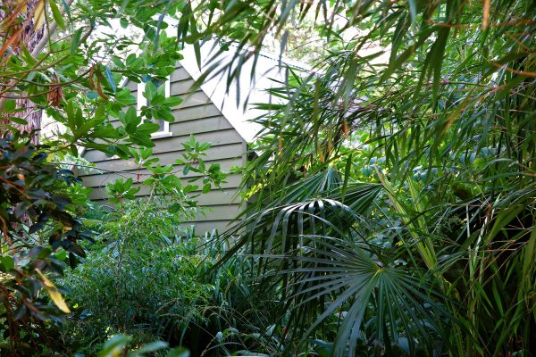 Plant trees, ferns and cordylines close to the house for a jungly look