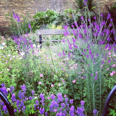 Have you got a community garden near you?