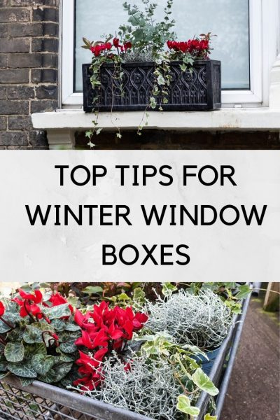 WINTER WINDOW BOX TIPS