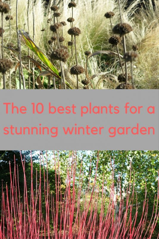 Summer plants that look good in a winter garden