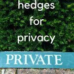 How to choose and plant the perfect privacy hedge