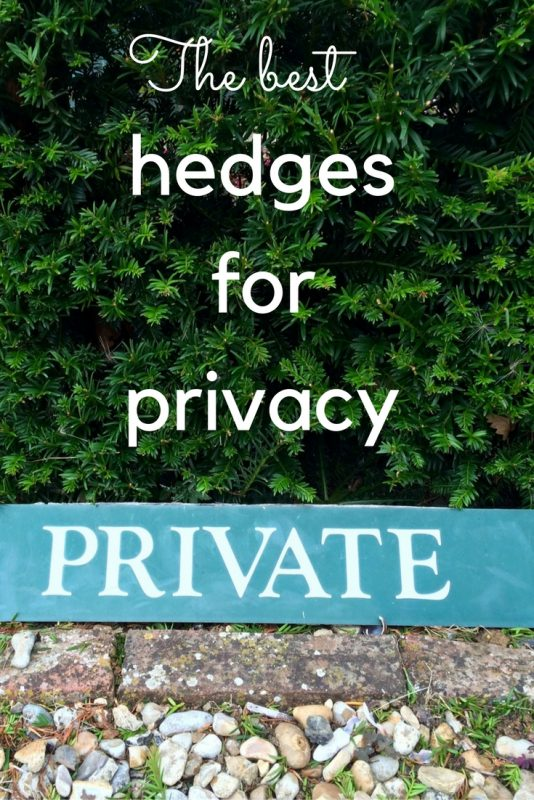 What You Really Need To Know About Evergreen Hedges For