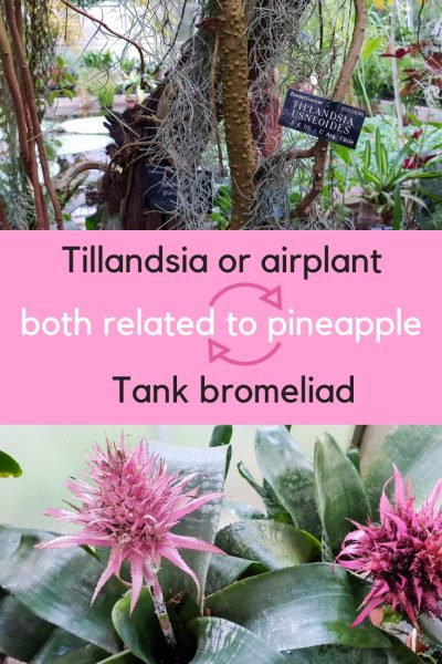 Bromeliads are another big plant family.