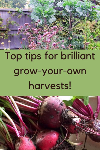 top tips for brilliant grow-your-own veg harvests