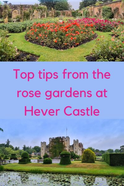 Hever Castle rose garden