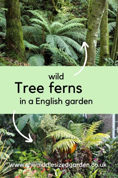 Tree ferns grow wild