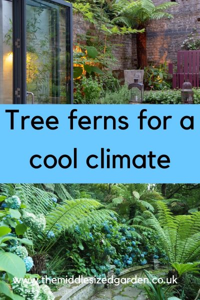 Tree ferns for a cool climate