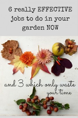 Garden jobs for fall & autumn