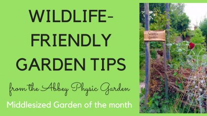 Wildlife-friendly gardening tips from the Abbey Physic Garden