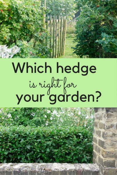 How to choose your perfect hedge. Do you want a hedge for privacy, wildlife or to grow in a difficult place? Should you plant an evergreen hedge or a deciduous one? And what do you need to know before you buy a hedge for a small (or even middle-sized!) garden or yard? Read this for answers, and to see some beautiful – and effective - hedging ideas.