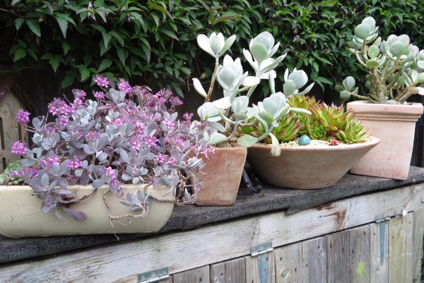 Tips for low maintenance garden pots