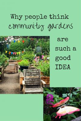 How your community garden is changing the world around you