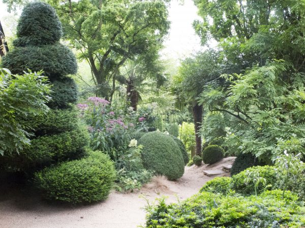 Box and tree ferns for shade