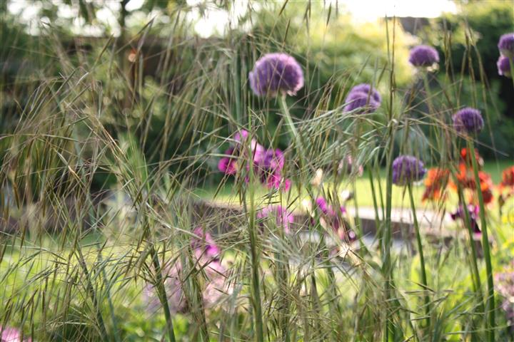 Perennials - like stipa - can be divided and moved.