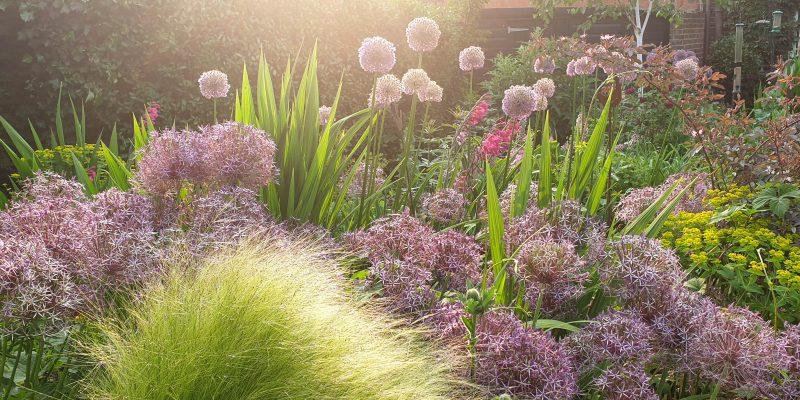 Self-seeded vs weeds – can you achieve the magic balance?