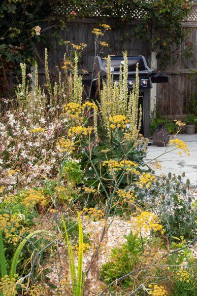 Coastal garden designed by Posy Gentles