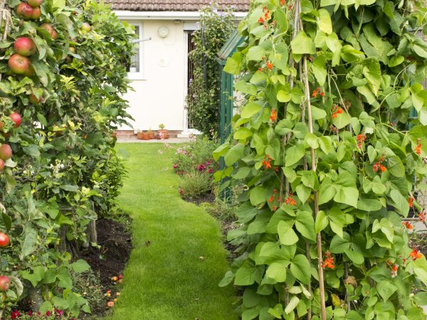 An Orchard In The Garden You Really Do Have The Space The