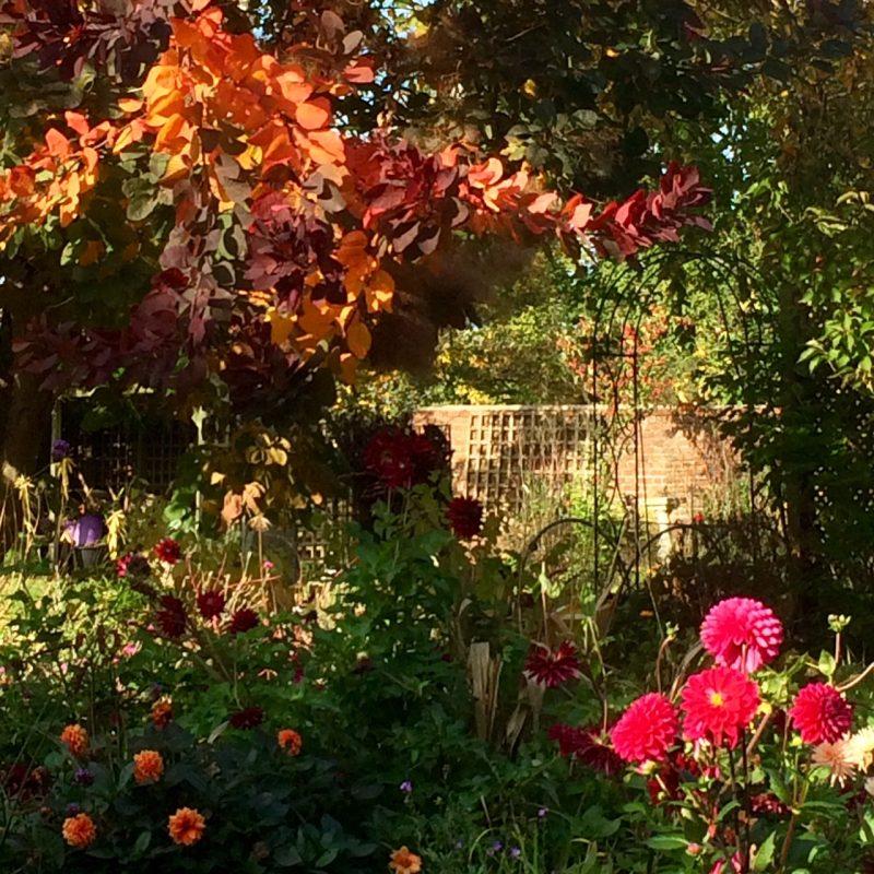 Dramatic autumn colour