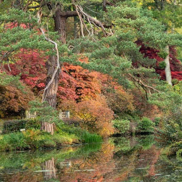 Autumn colour at Leonardslee Lakes & Gardens