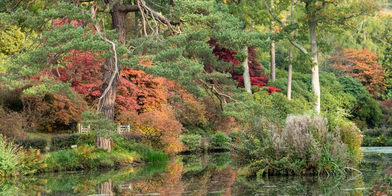 How to choose and plant a garden tree for brilliant autumn colour
