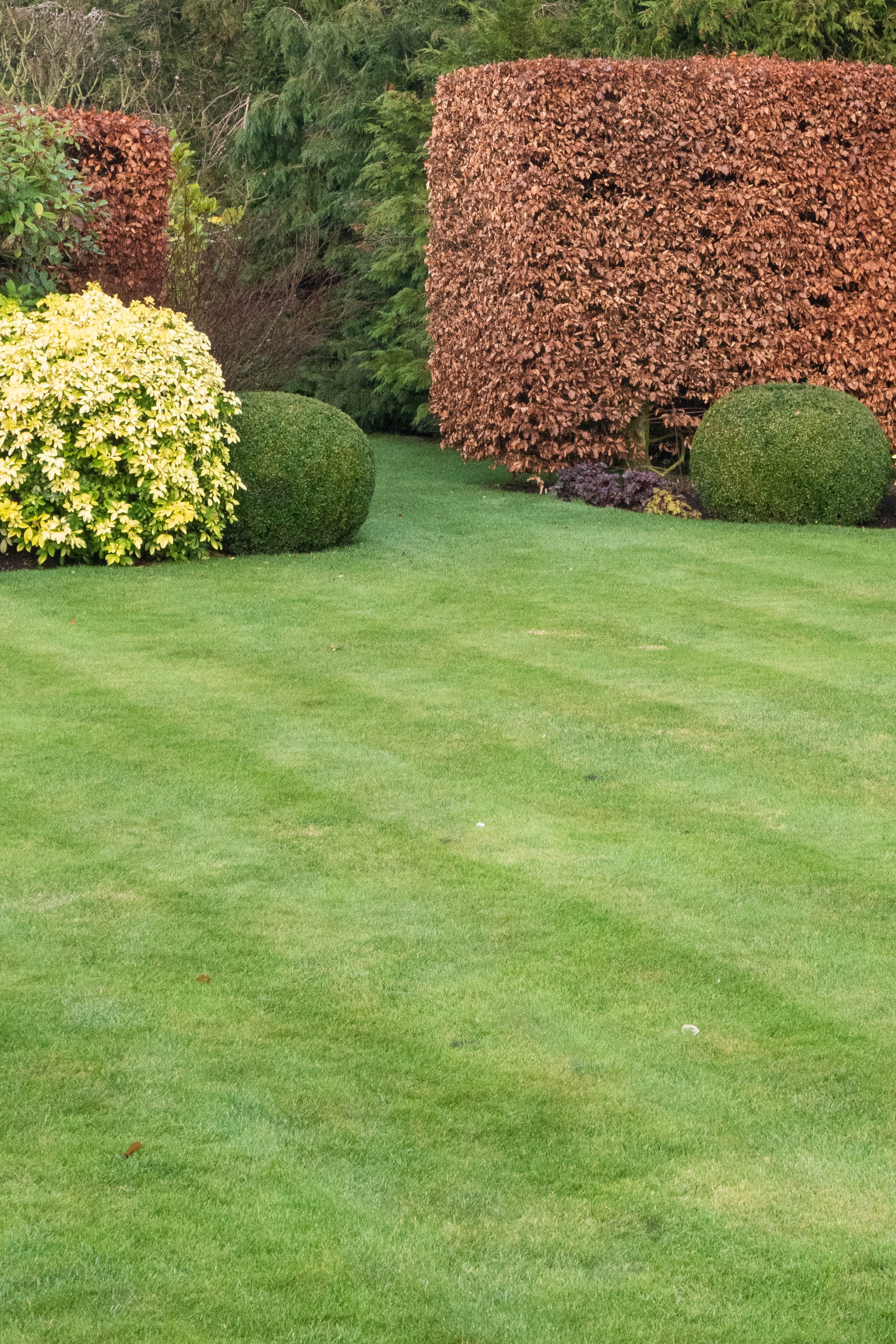 How To Use Easy Topiary Shapes In Stylish Ways The Middle Sized Garden Gardening Blog