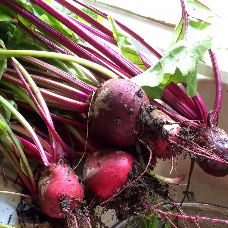 Beetroot is a good grow-your-own or allotment veg