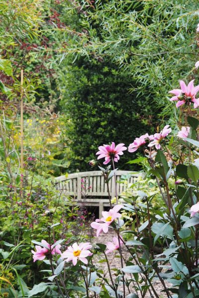 A sheltered spot for dahlias at the Salutation