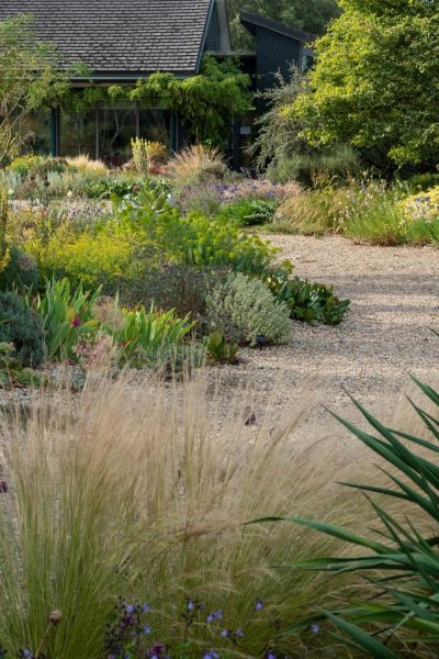 Dry garden at Beth Chatto gardens