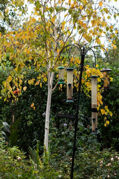 Keep bird feeders topped up