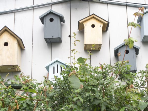 Bird boxes on a roof terrace