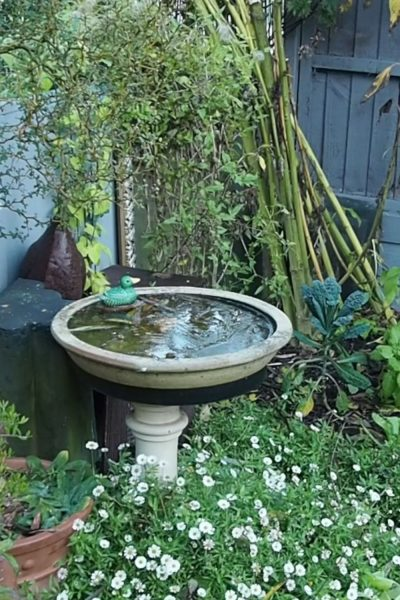 A birdbath is essential for wildlife friendly gardening