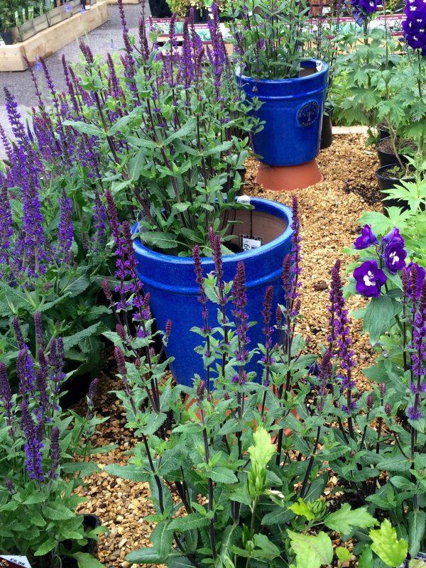 Colour-theme pots in borders