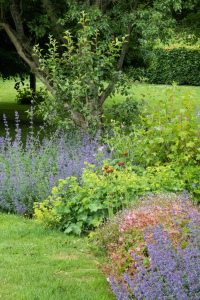 Blue and green border for harmonious summer garden colour