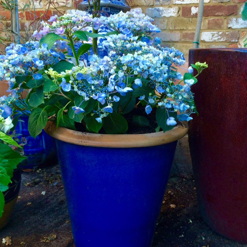 Match the colour of the pot to the colours of the flowers