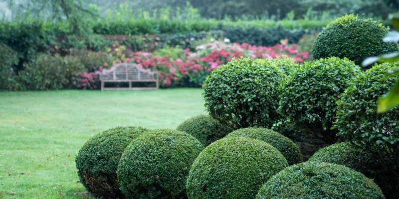 The three best alternatives to box for simple topiary