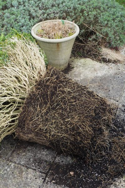 How to root prune your topiary in pots