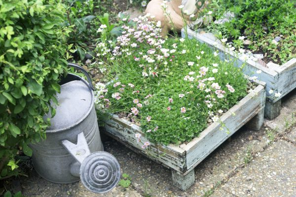 Search charity shops for garden pots and tools