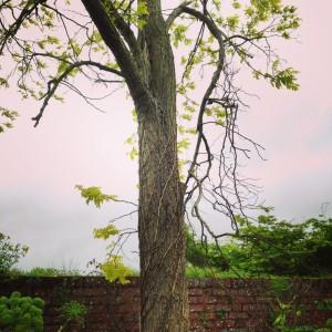 insuring open gardens - trees