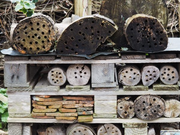 Bug hotel at the Abbey Physic Garden