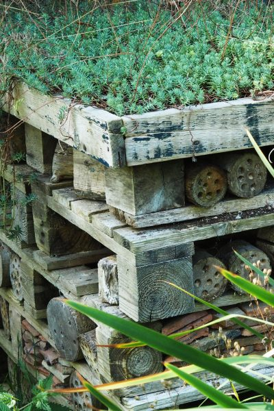 Find out what bug hotels really need #sustainableliving #garden
