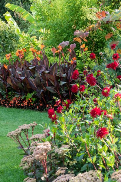 Plant dahlias with cannas