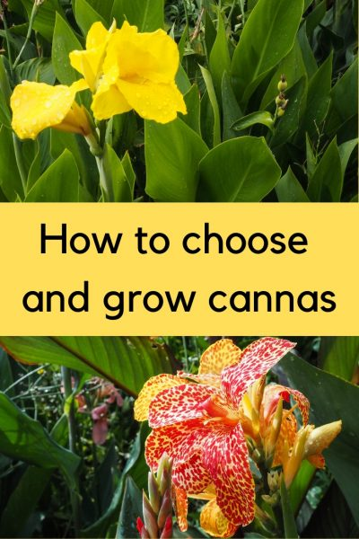 Everything you need to know about cannas