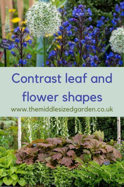 Contrast leaf and flower shapes