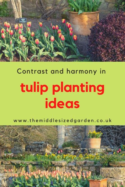 Plant tulips with blocks of wallflowers
