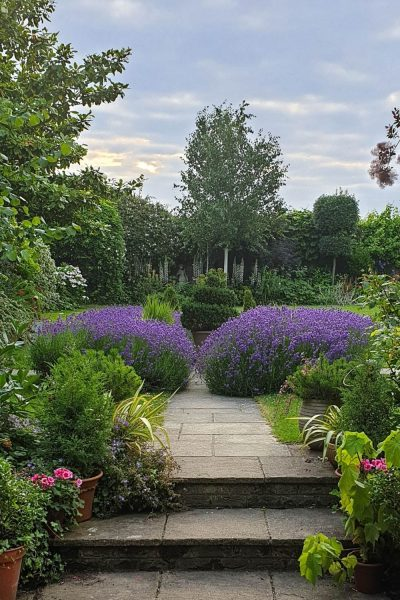 Easy care lavender